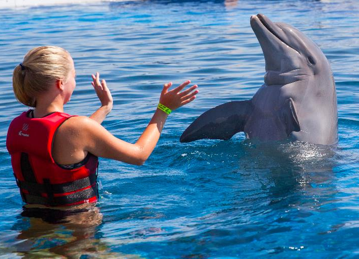 Includes Dolphin Encounter Program A 20 Minute Shallow Water Experience Including Touching Feeding Playing Kissing And Training With