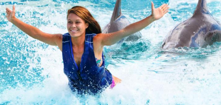 Oahu Hawaii Dolphin Royal Swim
