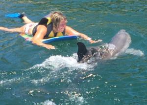Puerto Plata Dolphin Royal Dolphin Swim