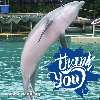 Thank you dolphin world