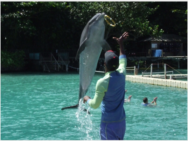 Work with the Best Dolphin Faciliies