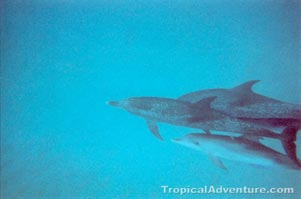 dolphin photograph album