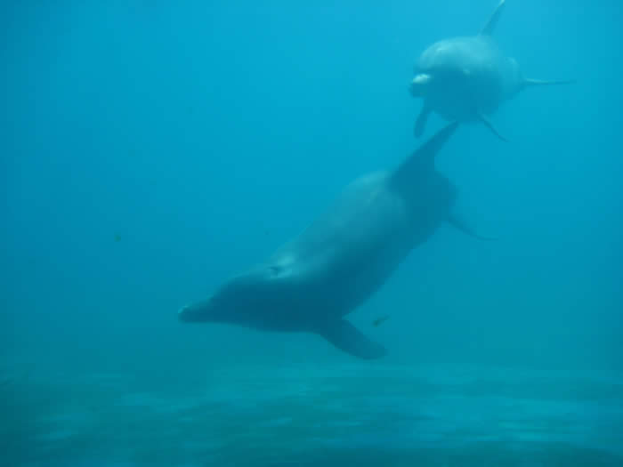 dolphin vs porpoises