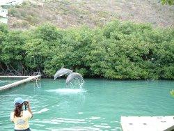 dolphin swim tortola bvi
