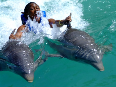 cozumel dolphin swimming experience