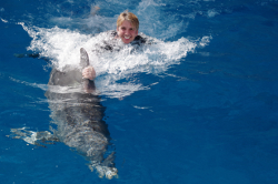 Swim with Dolphins Near Fort Walton Beach