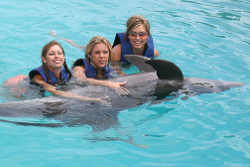 Swim with Dolphins Hawaii Oahu Island