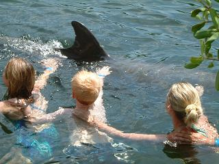 key largo dolphin swim photos