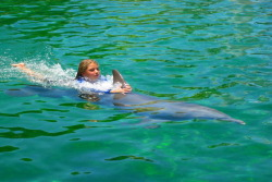Swim with Dolphins Fort Lauderdale Tours