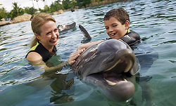 Orlando swimming with dolphins