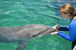 758053c5 Dolphin Swim Miami - Swimming With Dolphins (800) 667-5524