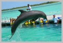 photo of punta cana dolphin swim