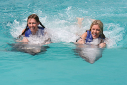 swim with dolphins florida photo