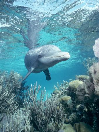 where do dolphin live