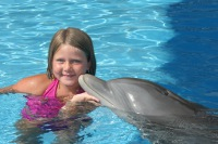 Dolphins Near Fort Walton Beach