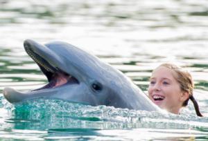 Dolphin_Ride_Orlando-768x522