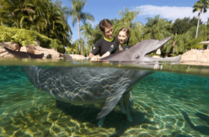 Orlando_Dolphin_Program_