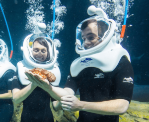 Sea_Trek_Orlando