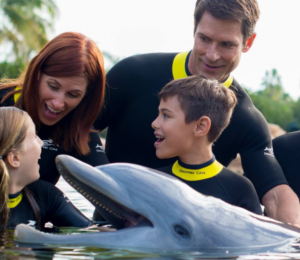 Swimming with Dolphins in Orlando