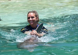 Swim with dolphins Miami review