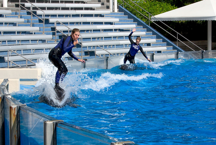 Dolphin Trainer Show