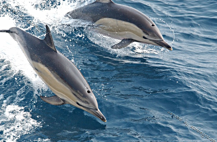 dolphin pods