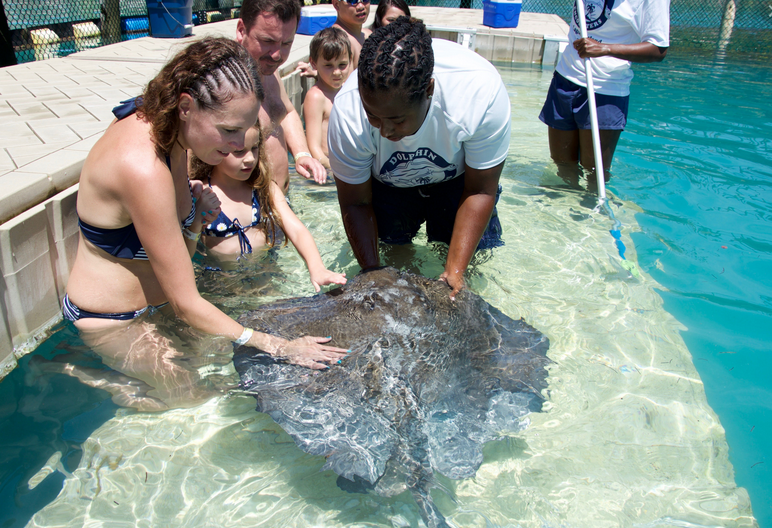 Sting Ray Encounter Nassau