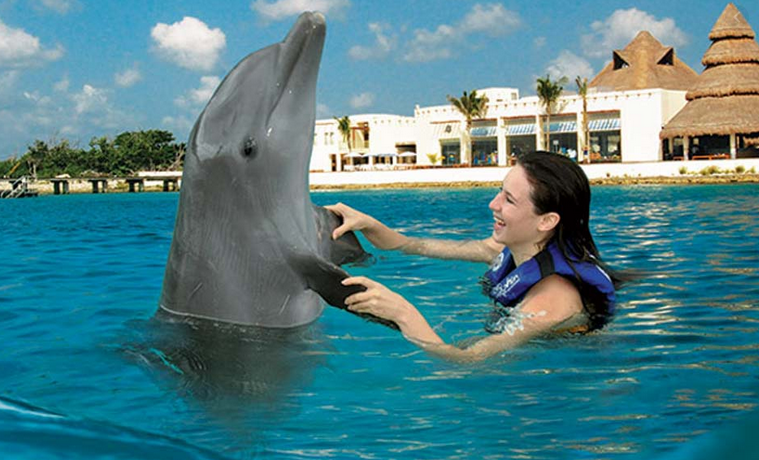 Swimming with dolphins punta cana
