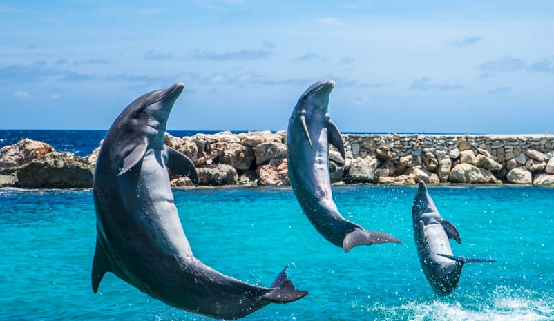 Swimming with Dolphins Puerto Plata