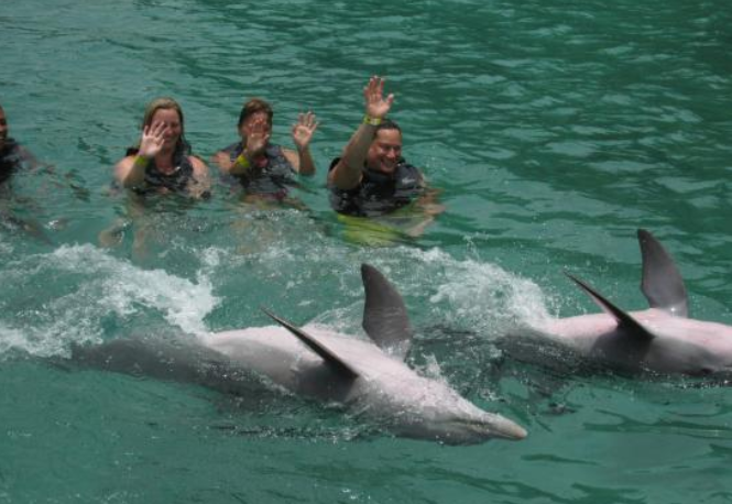 Swim with Dolphins in Jamaica Ocho Rios