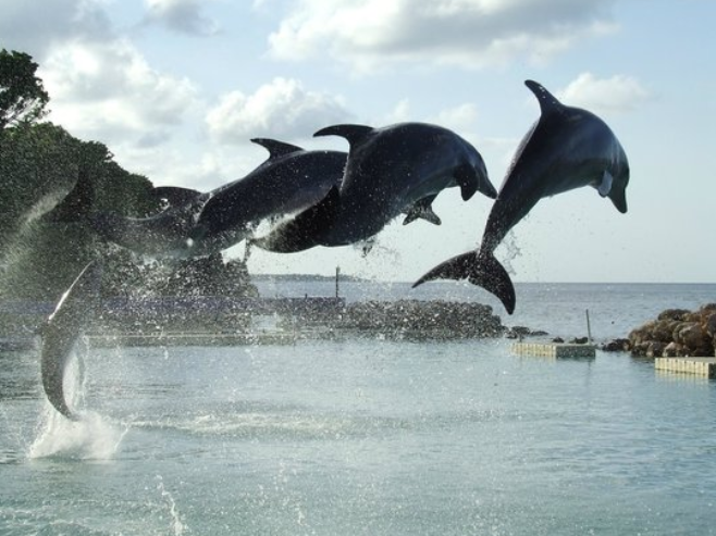 negril dolphin swim program