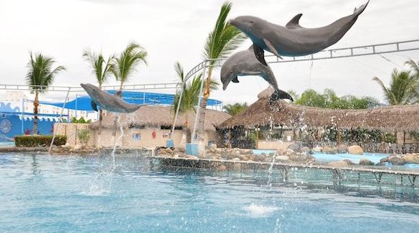 Dolphins Puerto Vallarta Mexico