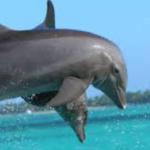 Punta Cana Bavaro Beach Dolphin Swim