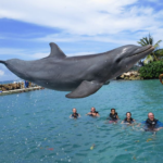 Swimming with dolphins Jamaica