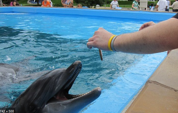 Feeding a dolphin captivity