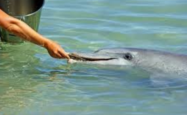 Getting Water Dolphin