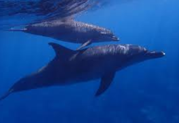 Feeding a Dolphin