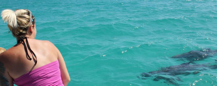 Key West Wild Dolphin Trip