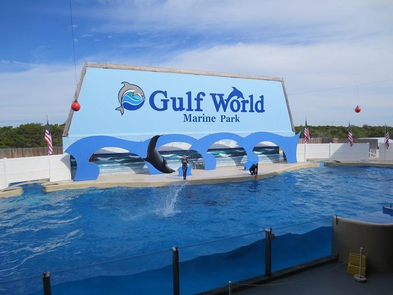 Dolphin Show Panama City Beach