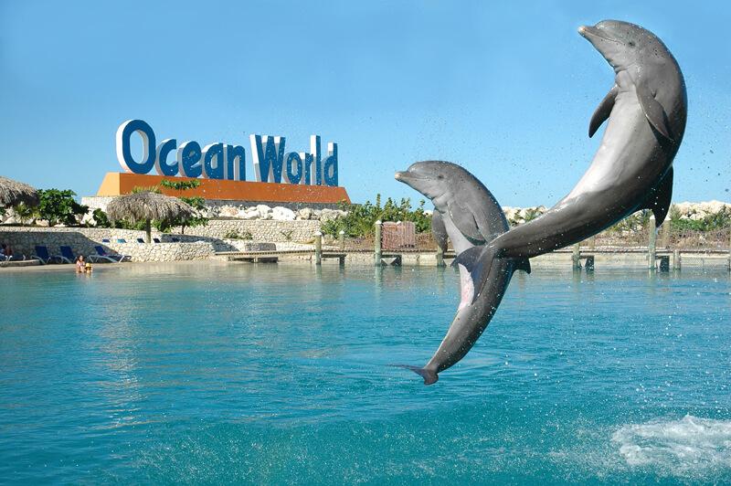 Ocean World Puerto Plata