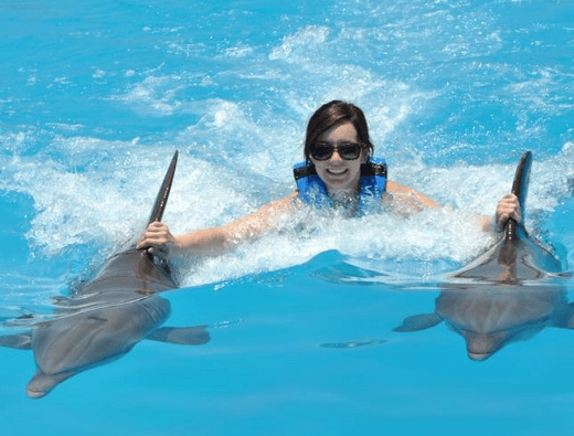 Swim with Dolphins St Kitts Nevis