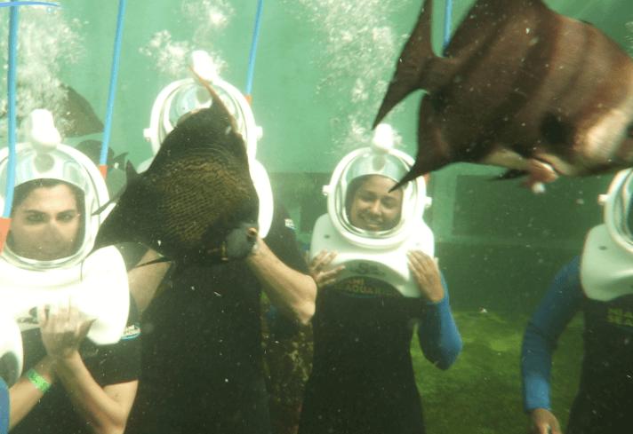 Group fun Sea Trek Miami