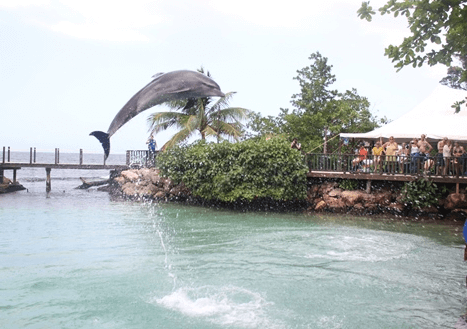 Dolphin Jumps in Jamaica