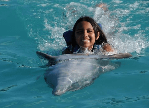 Swim with Dolphins Panama City Beach