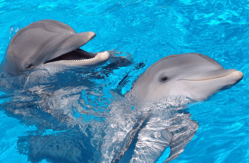 Dolphins Fun in Panama City Beach FL