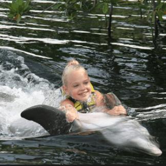 Dolphin Belly Ride in the FL Keys