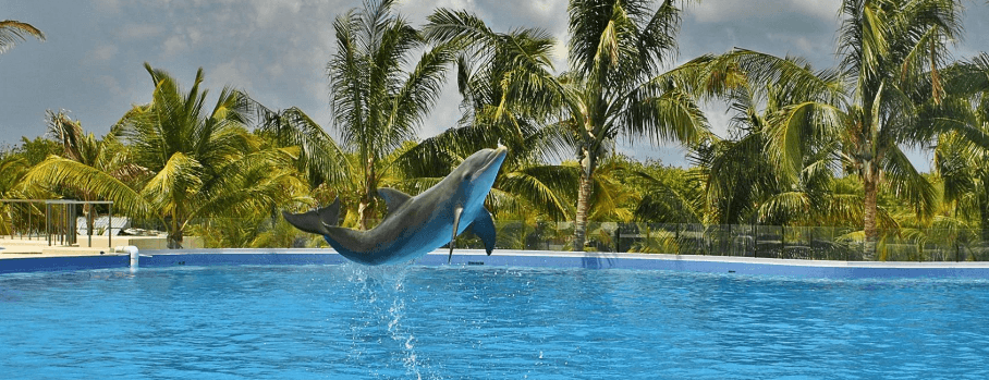 Swimming with Dolphins Punta Cana Dominican Republic