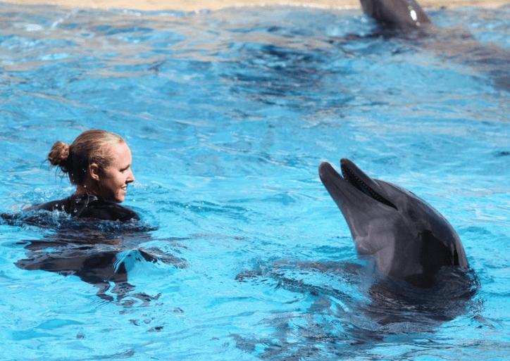Swim with Dolphin Panama City Beach