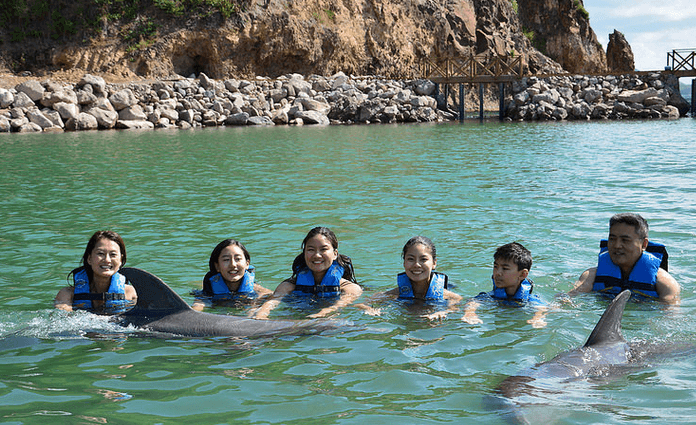 Family Time with dolphins in St Kitts Nevis