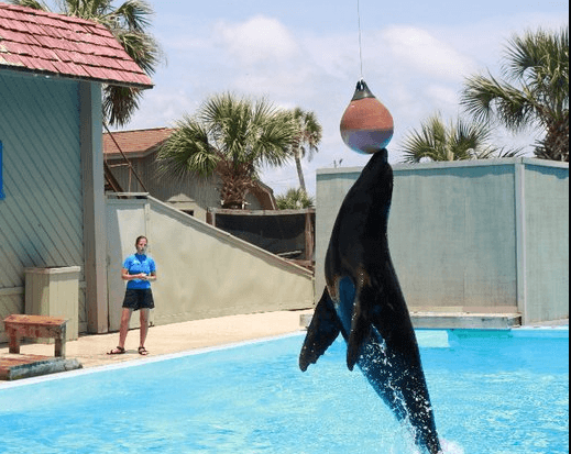Sea Lion Show Panama City Beach